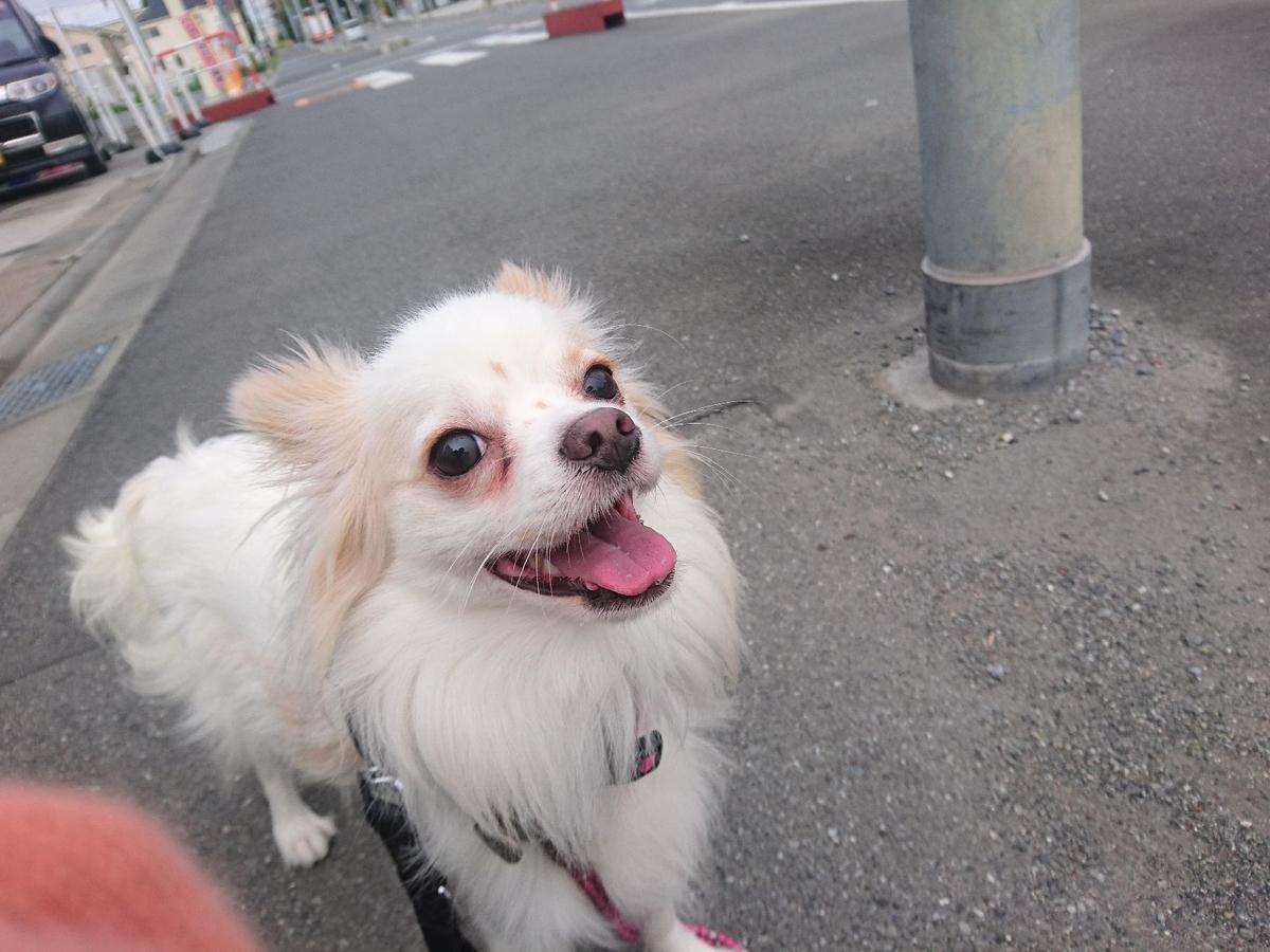 f:id:miyuki1967:20190924104955j:plain:w450