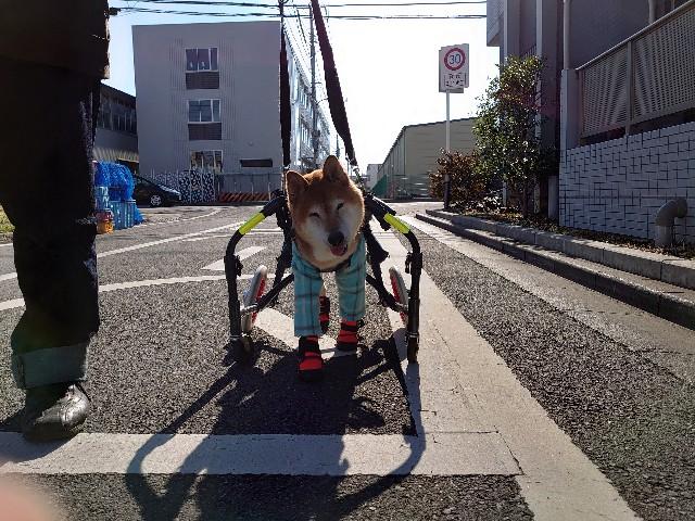 f:id:miyuki1967:20200117100146j:plain:w450