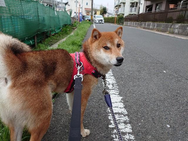f:id:miyuki1967:20210330160821j:plain:w450