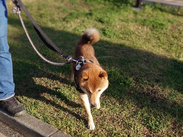f:id:miyuki1967:20210415142144j:plain:w450