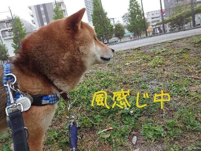 f:id:miyuki1967:20210508140037j:plain:w450
