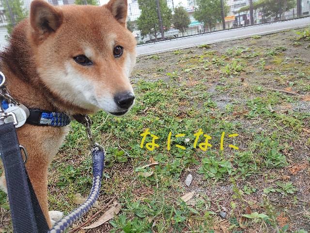 f:id:miyuki1967:20210508140215j:plain:w450