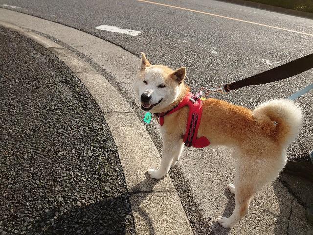 f:id:miyuki1967:20210604171713j:plain:w450