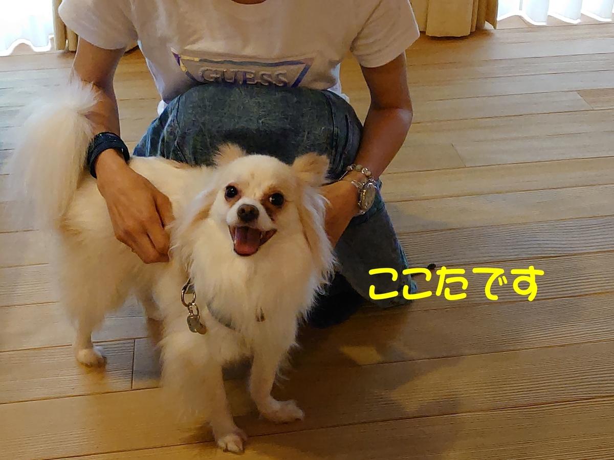 f:id:miyuki1967:20210607131227j:plain:w450