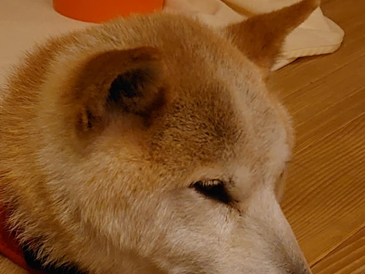 f:id:miyuki1967:20210716155621j:plain:w450