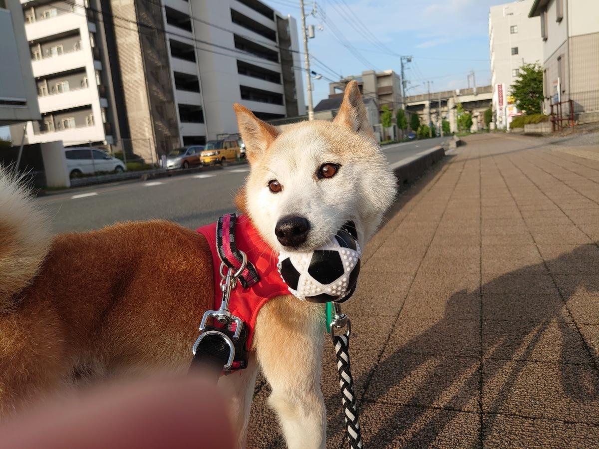 f:id:miyuki1967:20210716155826j:plain:w450