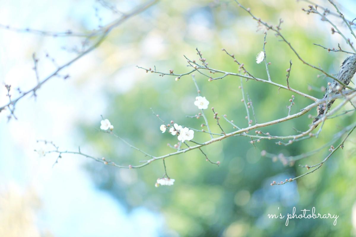 f:id:miyuki_sato:20210119130848j:plain