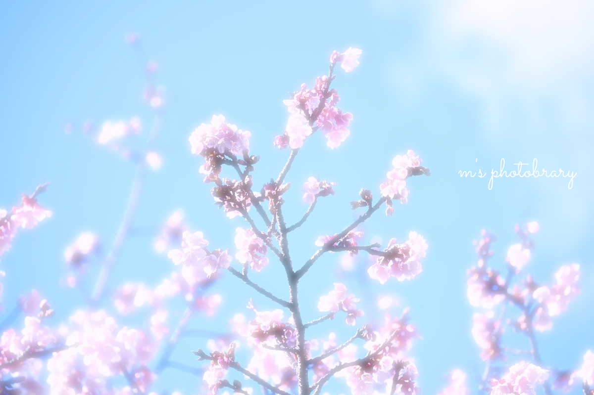 f:id:miyuki_sato:20210129202035j:plain