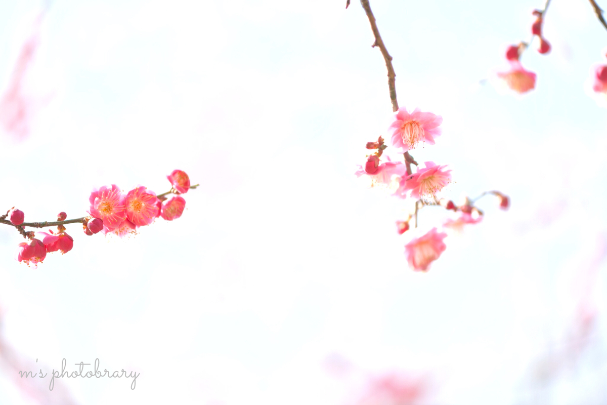 f:id:miyuki_sato:20210214220153j:plain