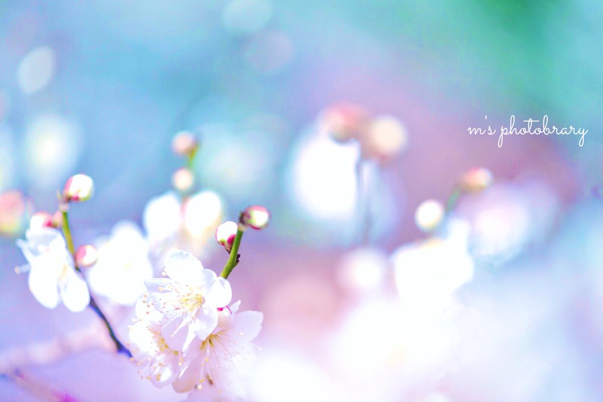 f:id:miyuki_sato:20210224090527j:plain
