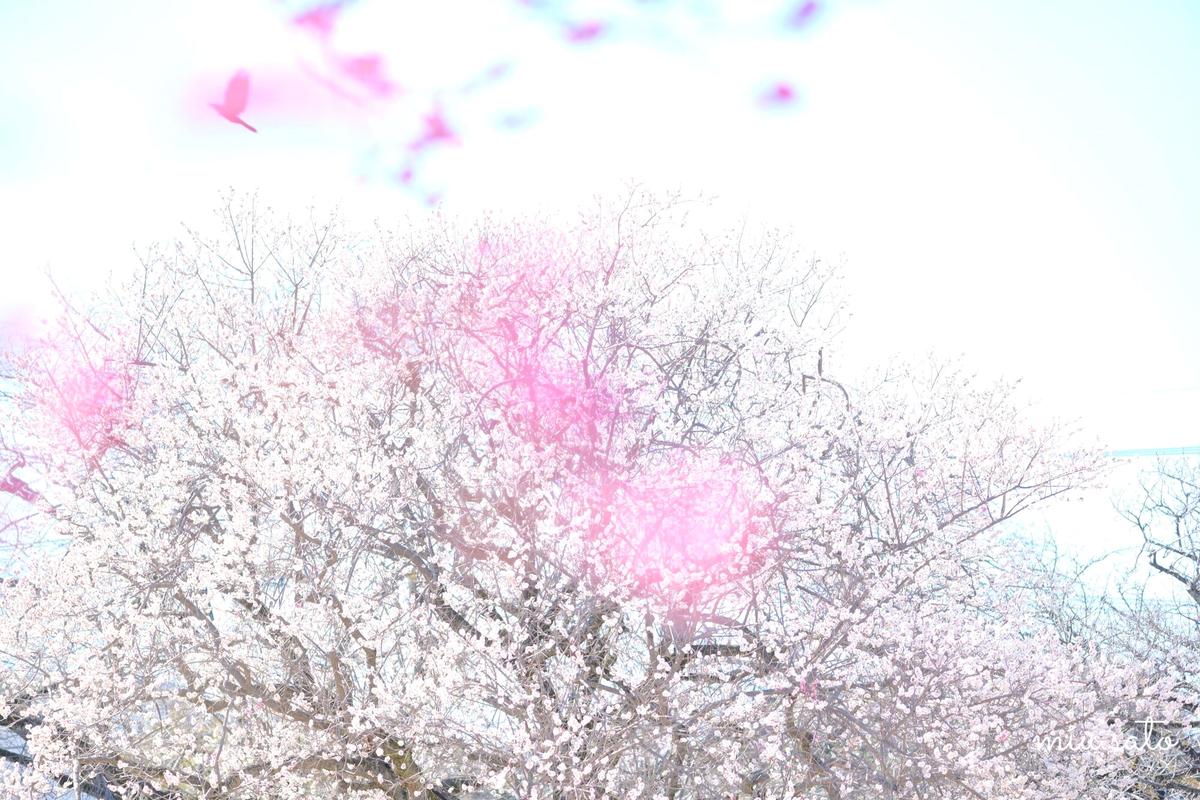 f:id:miyuki_sato:20210306204122j:plain