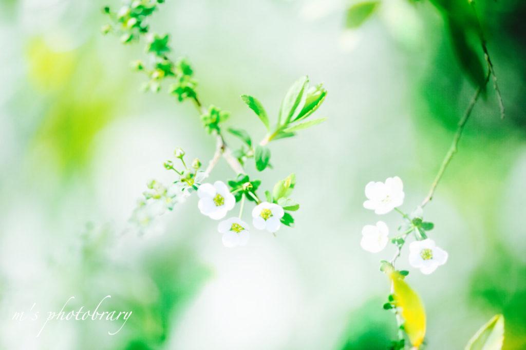 f:id:miyuki_sato:20210308141419j:plain