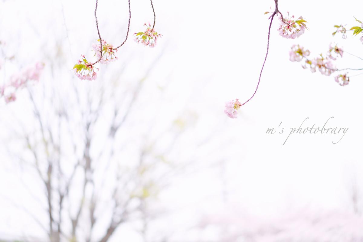 f:id:miyuki_sato:20210315085106j:plain