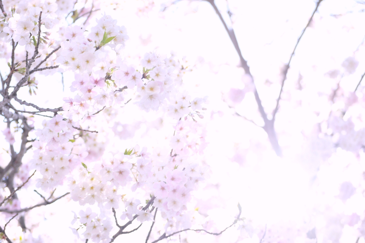 f:id:miyuki_sato:20210324191741p:plain