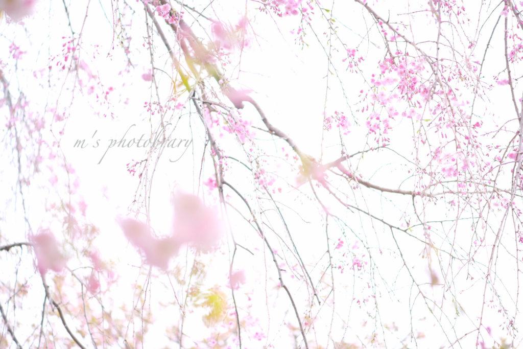 f:id:miyuki_sato:20210325200442j:plain
