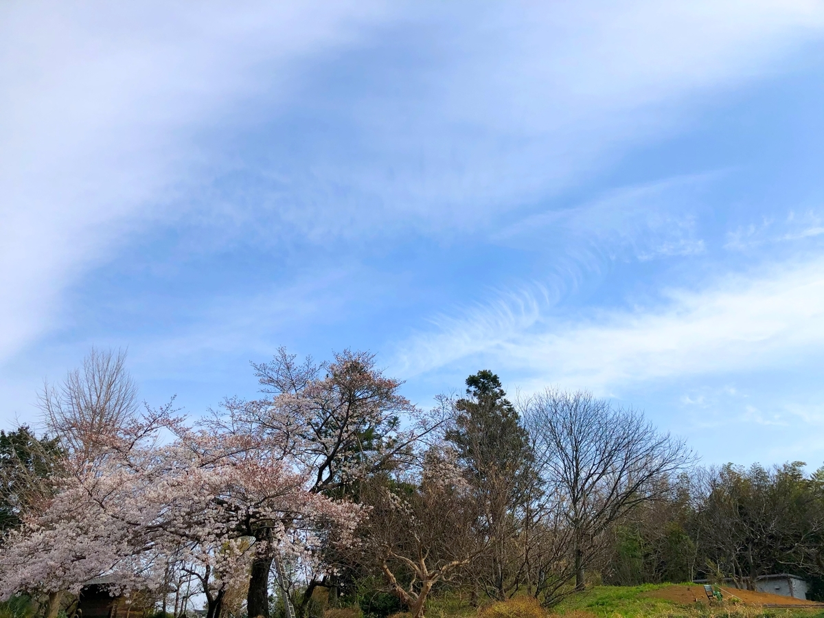 f:id:miyuki_sato:20210327190027j:plain