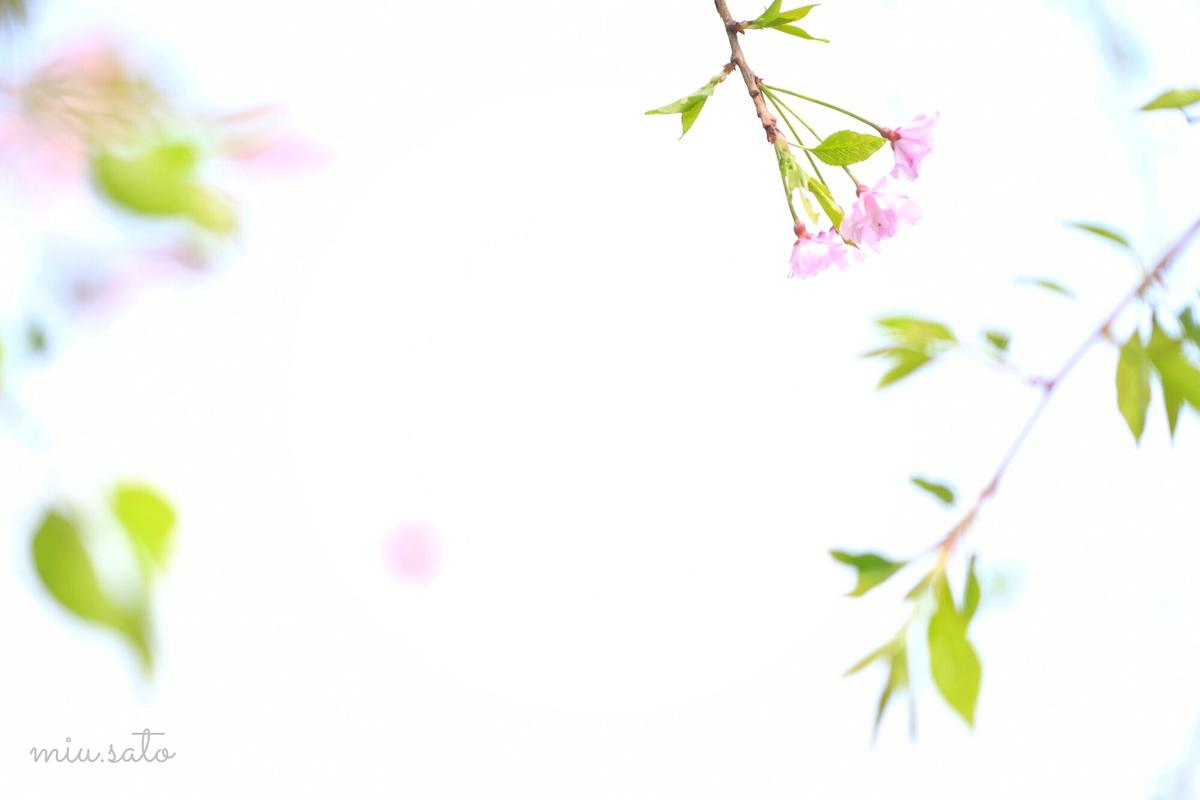 f:id:miyuki_sato:20210401184902j:plain