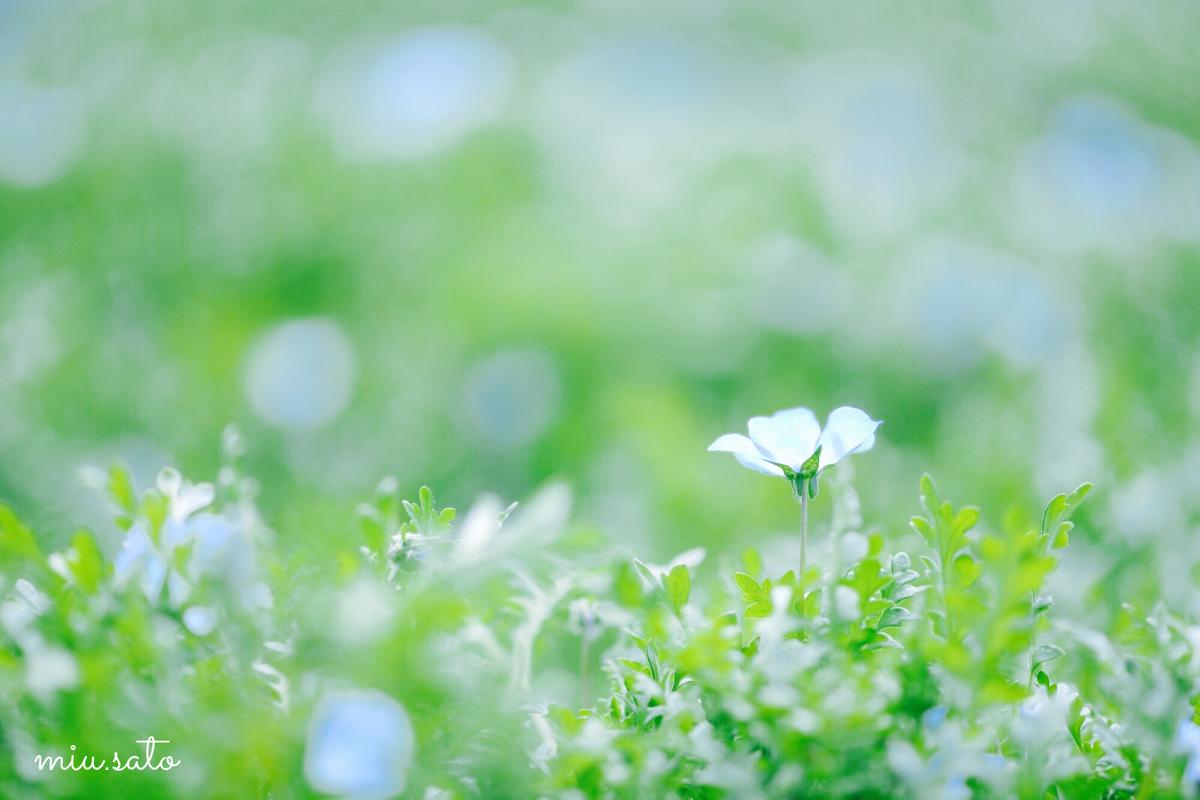 f:id:miyuki_sato:20210410102659j:plain