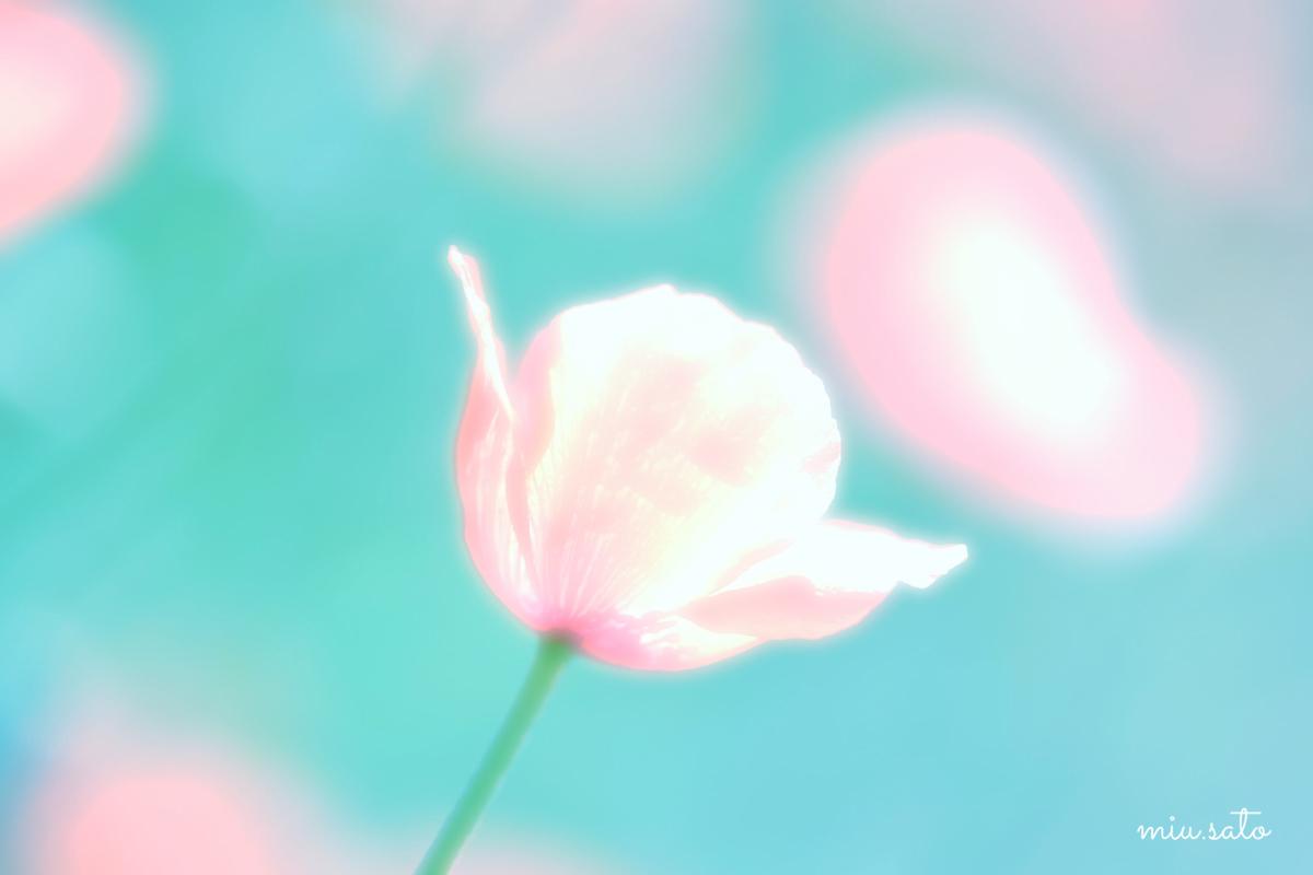 f:id:miyuki_sato:20210520092054j:plain