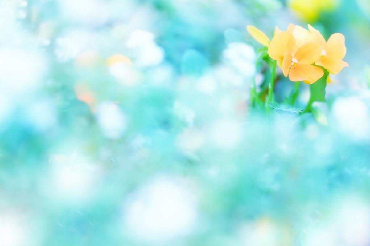 f:id:miyuki_sato:20210803104016j:plain