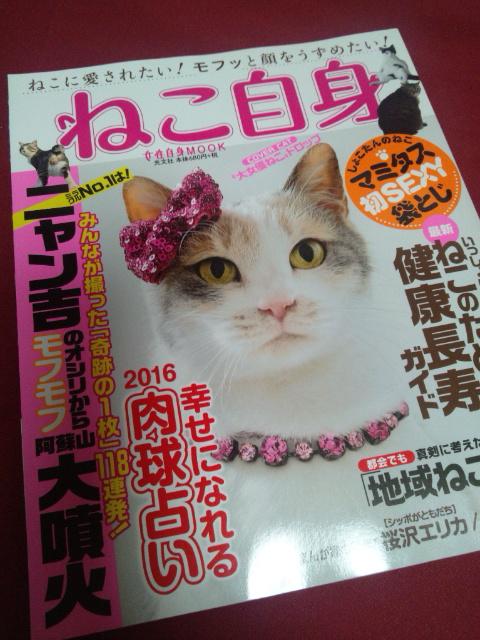 f:id:miyukichichiki:20161102231032j:plain