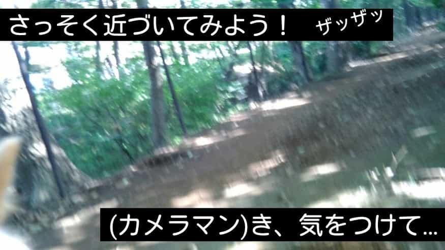 f:id:miyumasi:20161012150142j:plain