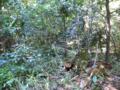 自然遷移を利用した森づくり 明治神宮