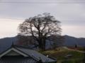 醍醐桜 20070331