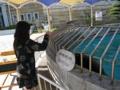 おやびん オタリアと遊ぶ 渋川マリン水族館