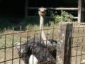 ダチョウは笑ってた 渋川動物公園