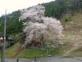 岩井畝の大桜 20120421