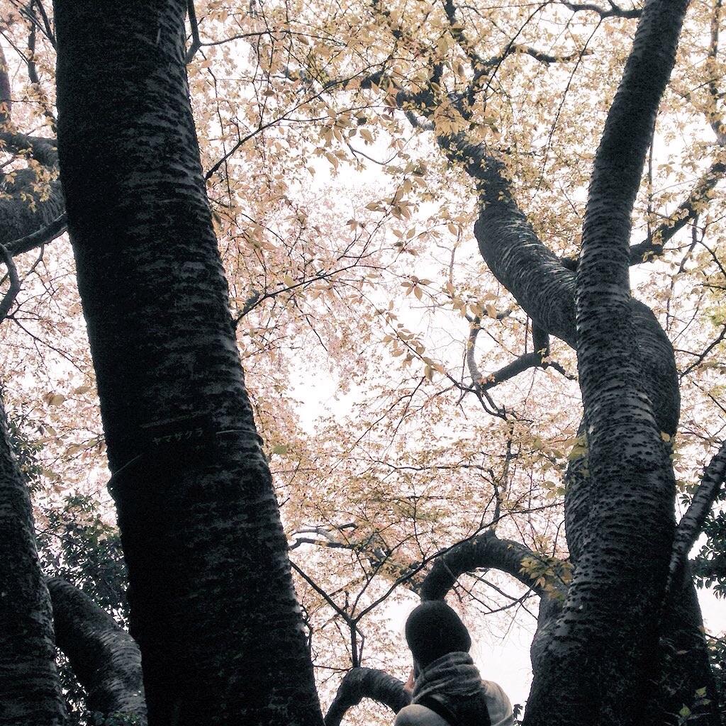 f:id:mizokoji:20170409000039j:image