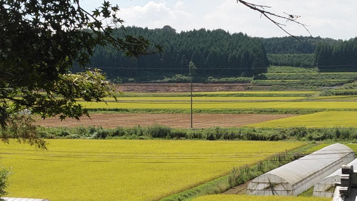 f:id:mizu-kuki:20190908122652j:plain