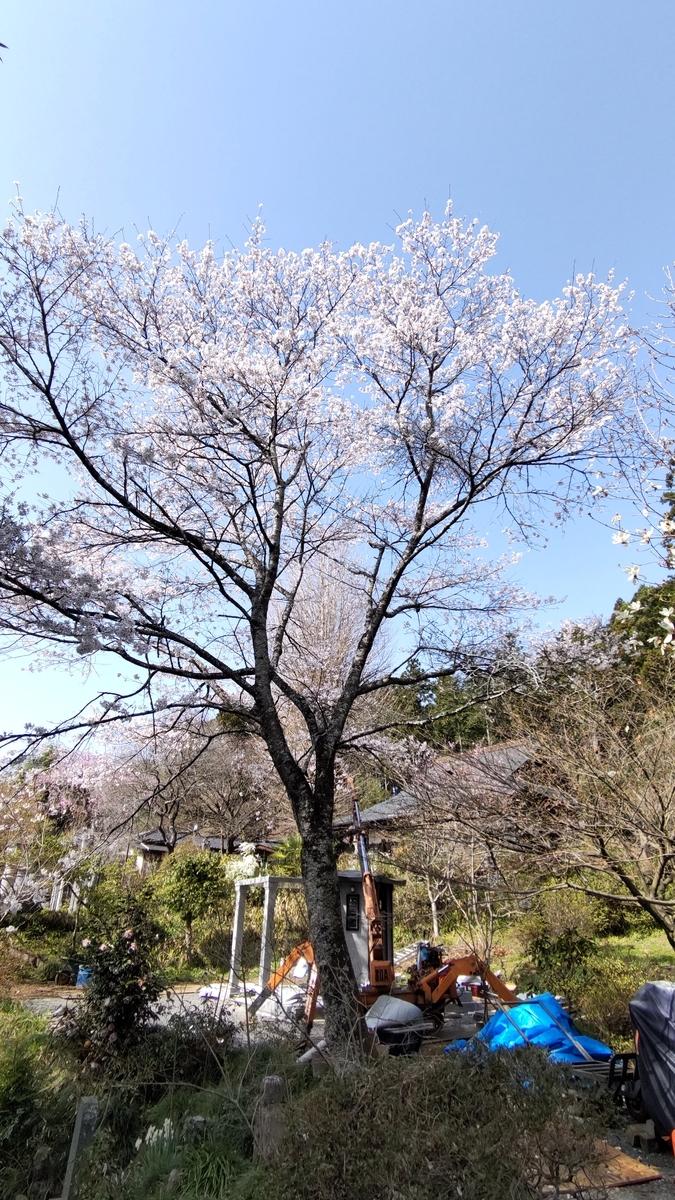 f:id:mizu-kuki:20210403204917j:plain