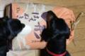 [食べ物]20090525山形県庄内産はえぬき
