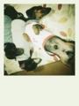 [ジンナギバジル]20120117