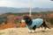 20151107 ひるがの高原SA