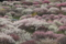 20160313 いなべ農業公園梅まつり