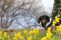 [nagi]20170107 第一なぎさ公園