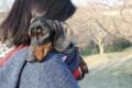 [cinq]20170402成田さくらの山公園