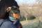 20170402成田さくらの山公園