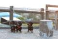 [nagibasilcinq]20180428竜洋海洋公園