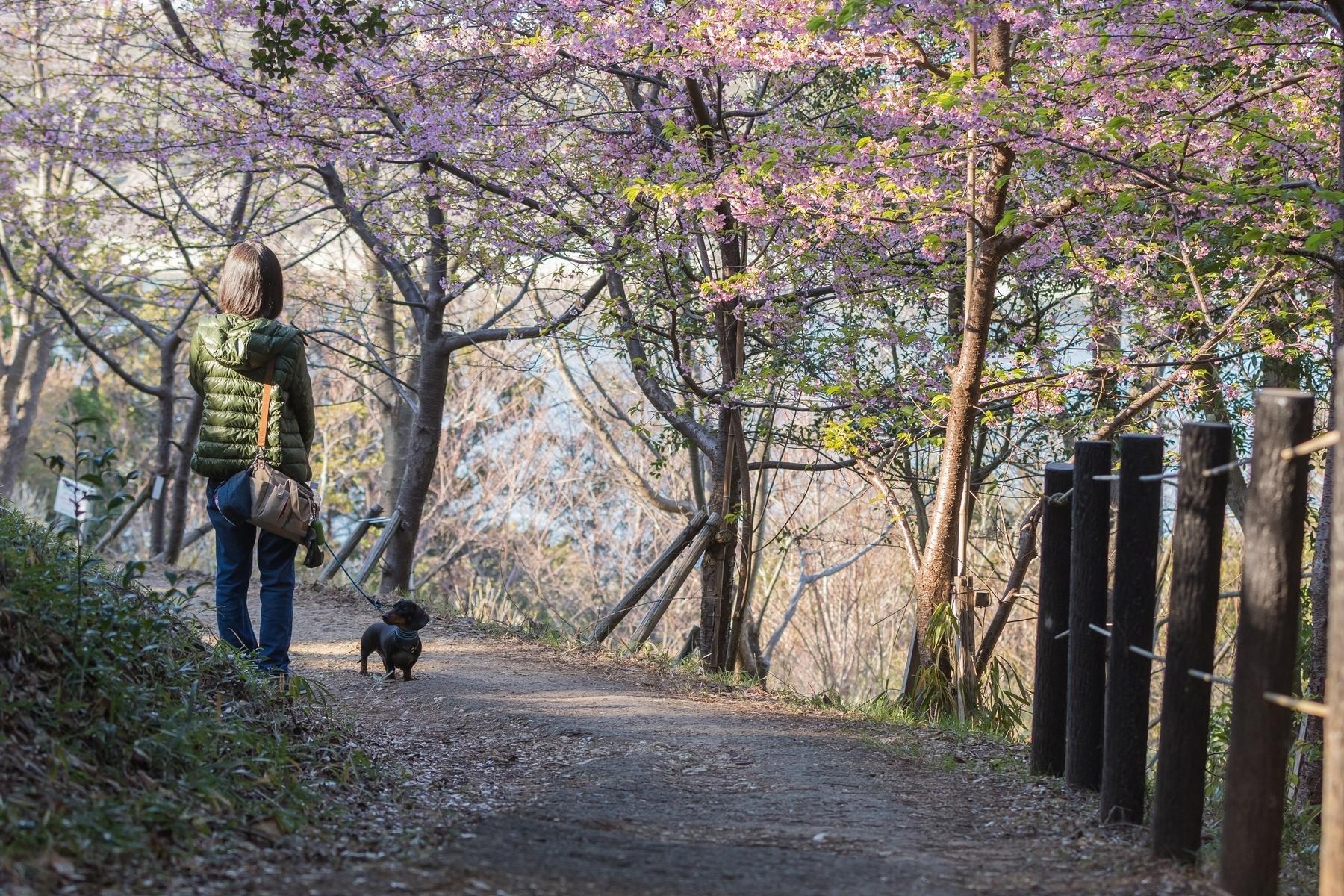 20190309聖崎公園