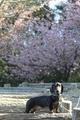 [sinq]20190309聖崎公園