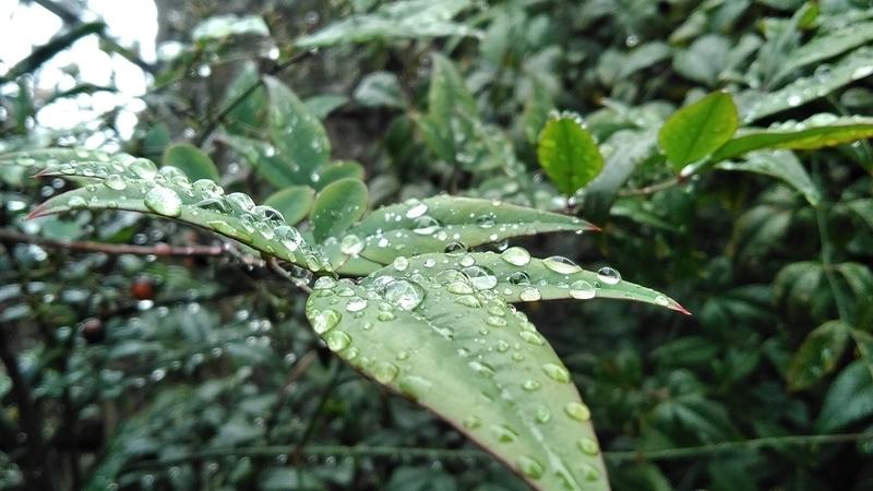 f:id:mizu_rainforest:20201013214845j:plain