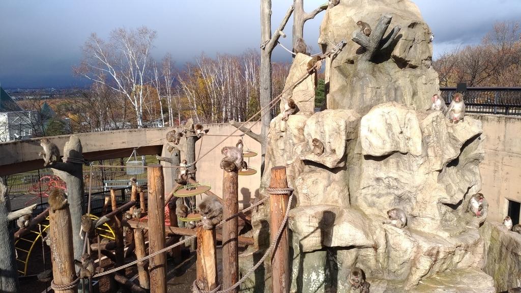 旭山動物園 サル山