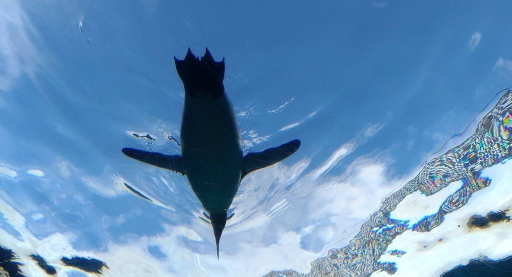 旭山動物園 空飛ぶペンギン
