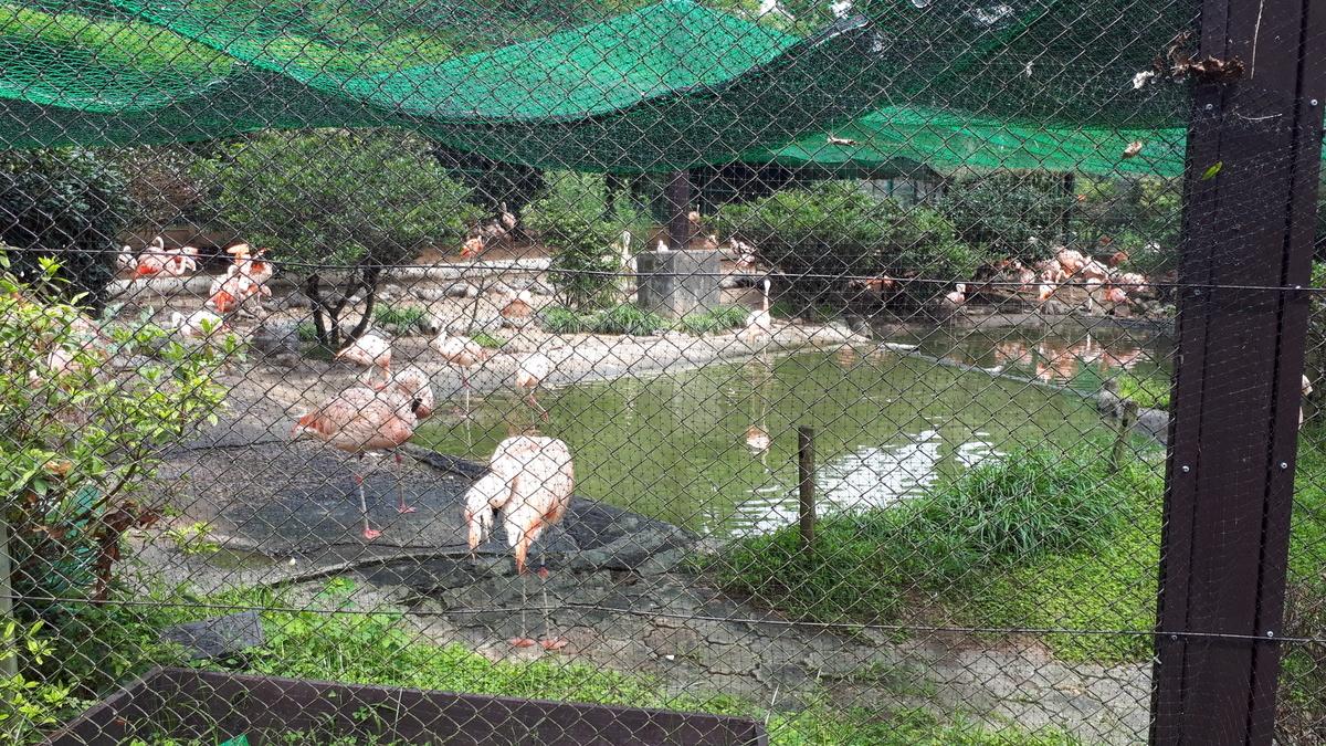 宮崎市フェニックス自然動物園 フラミンゴ