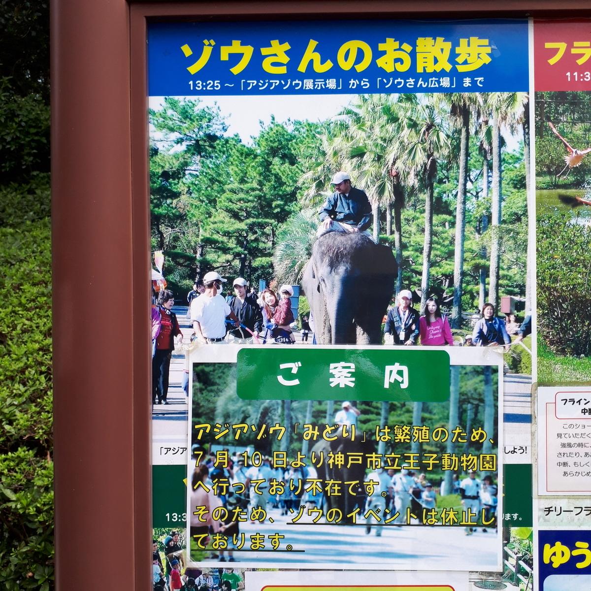 宮崎市フェニックス自然動物園 ゾウさんのお散歩 休止中