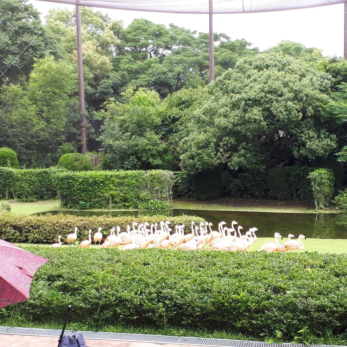 宮崎市フェニックス自然動物園 フライング・フラミンゴショー